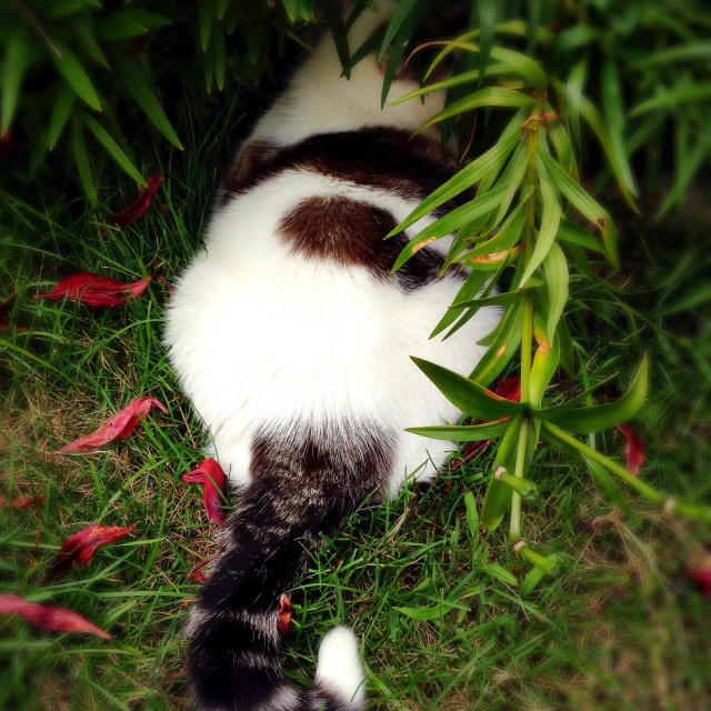 """""""A cat hiding in a flower bed."""" stock image"""