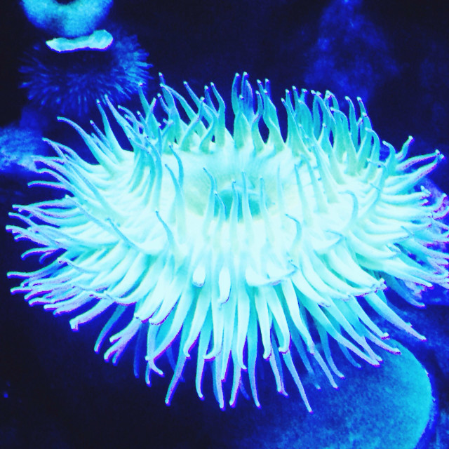 """Anemone"" stock image"