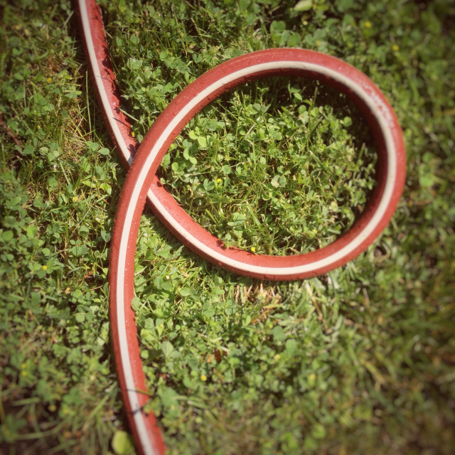 """Twisted garden hose in a lawn"" stock image"