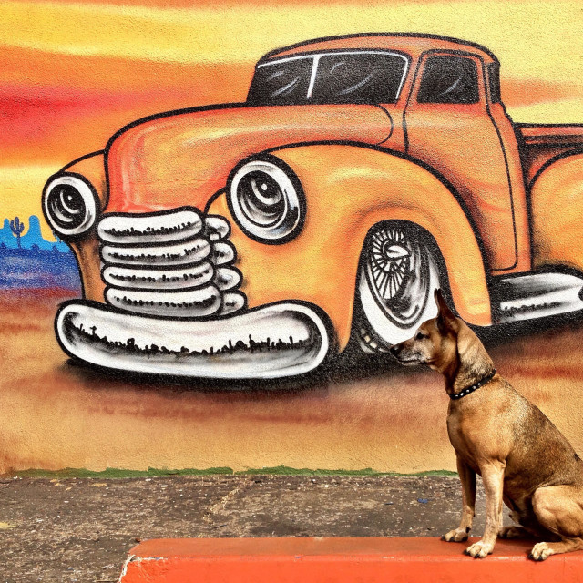 """Dog sitting in front of colorful graffiti wall."" stock image"