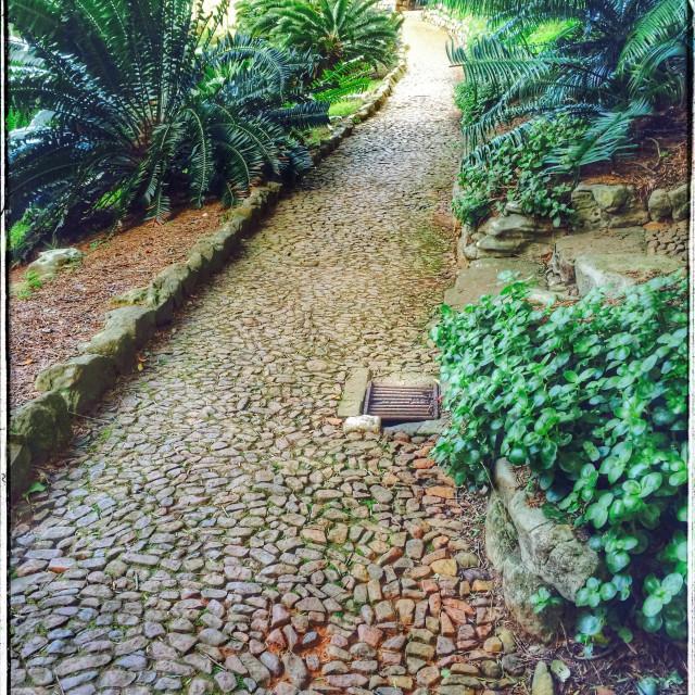 """Path in Kirstenbosch Botanical Gardens."" stock image"