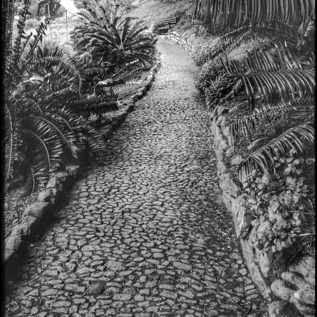 """""""Black and white photograph of a path in Kirstenbosch Botanical Gardens."""" stock image"""