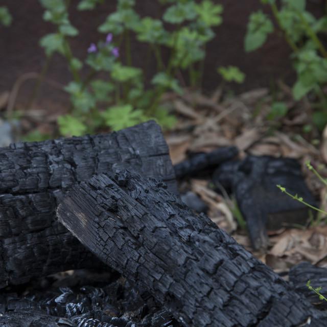 """Burnt Firewood"" stock image"