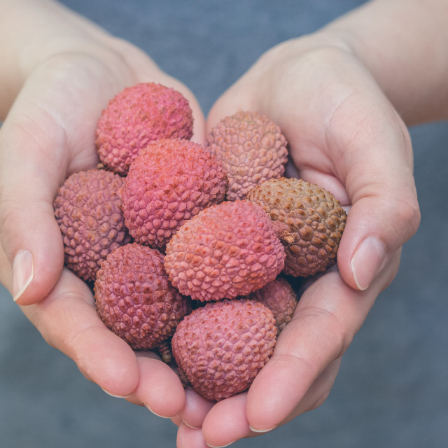 """Woman hands holding fresh Lechee, lychee, litchi, lischi lichen fruits"" stock image"