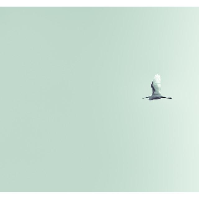 """Flight"" stock image"
