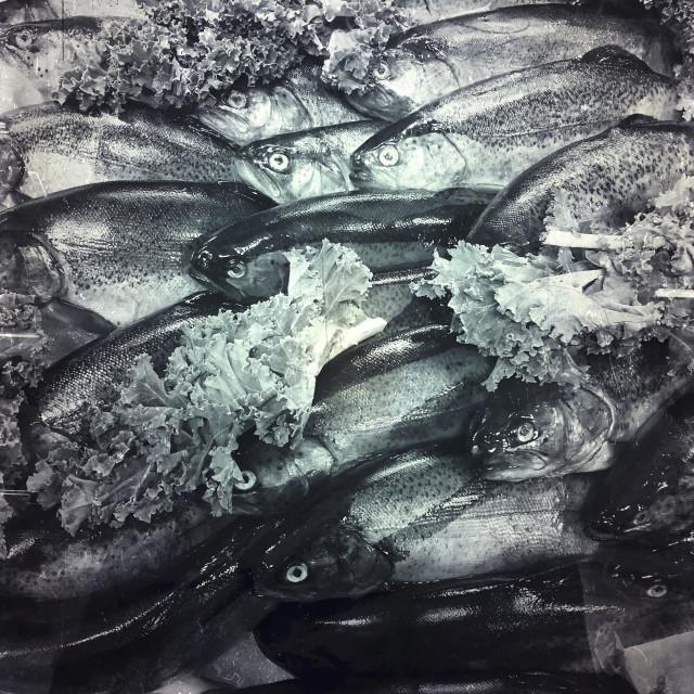 """Fresh fish at market"" stock image"