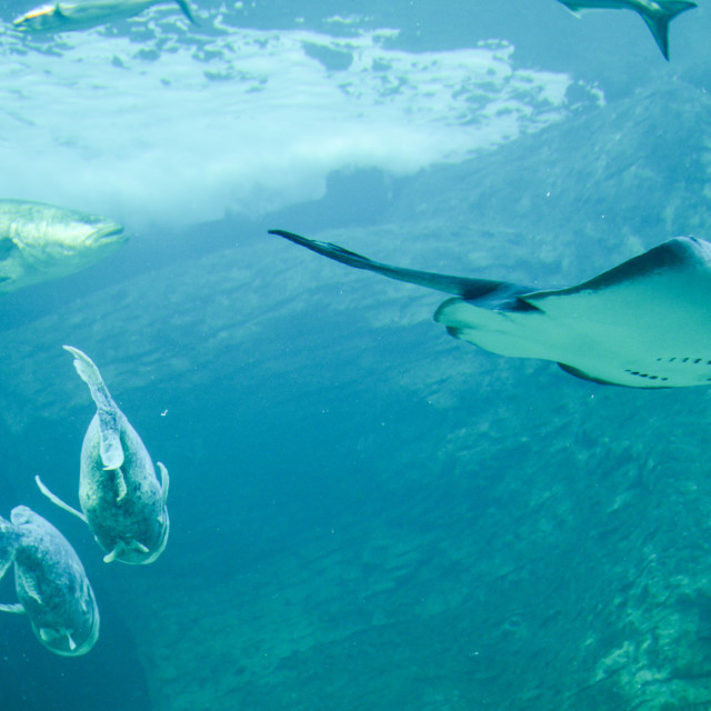 """""""Swimming Peacefully"""" stock image"""