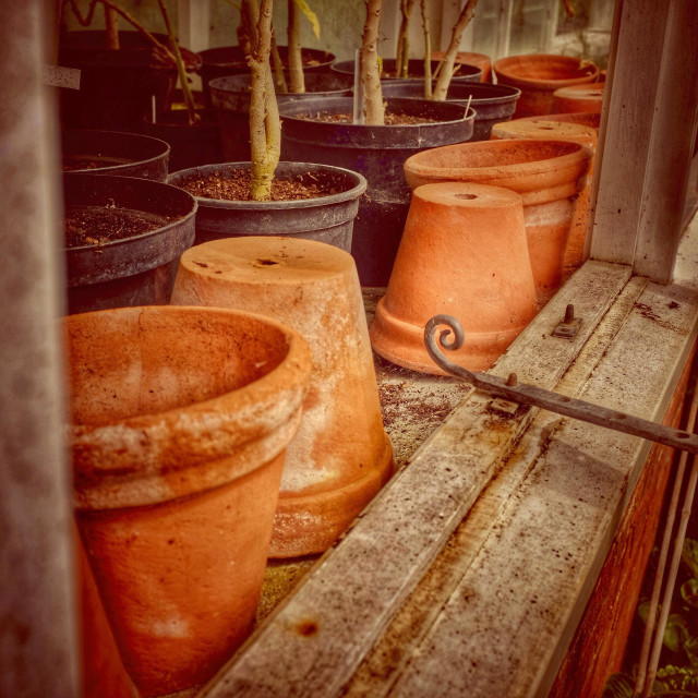 """Plant pots inside a greenhouse"" stock image"