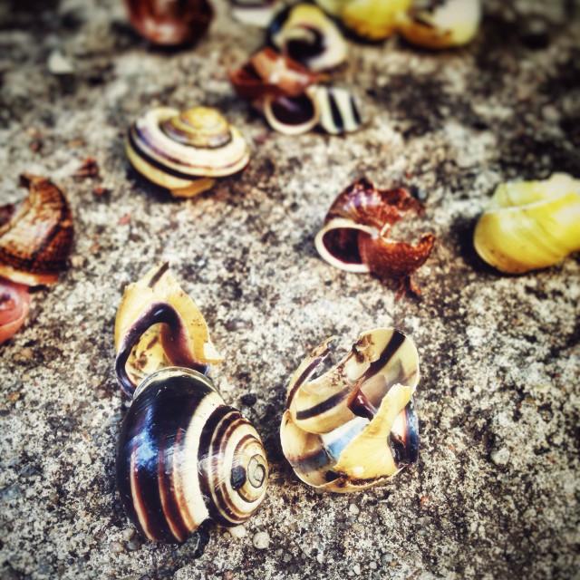 """""""Broken Snail Houses, thrush anvil"""" stock image"""