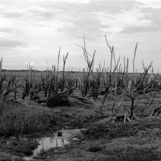 """Dead Woodland, 1"" stock image"