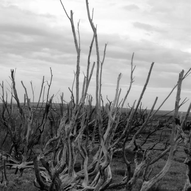 """Dead Woodland 2"" stock image"