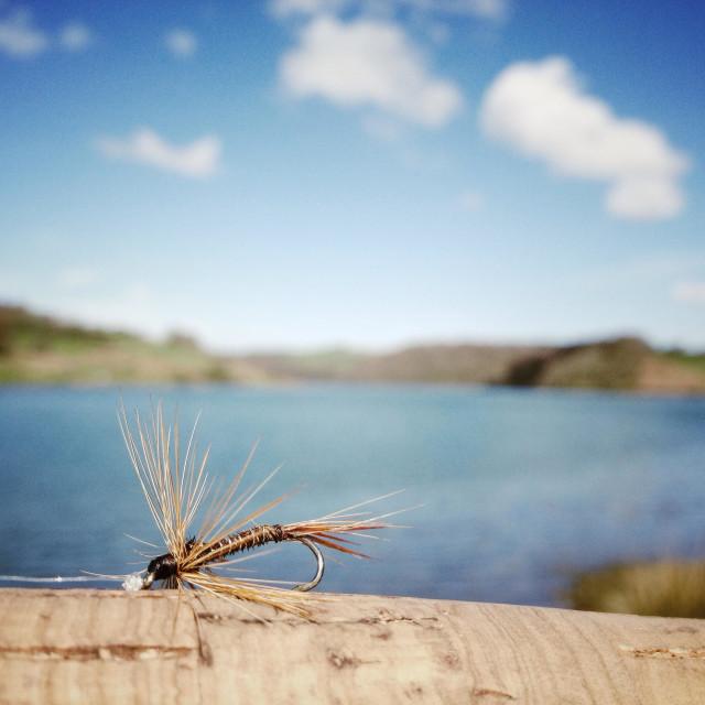 """Fly Fishing - Somerset, England"" stock image"
