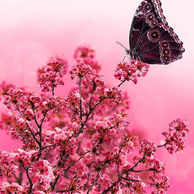 """Butterfly love"" stock image"