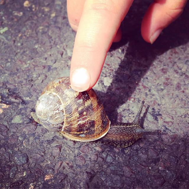 """Child examining a Snail"" stock image"
