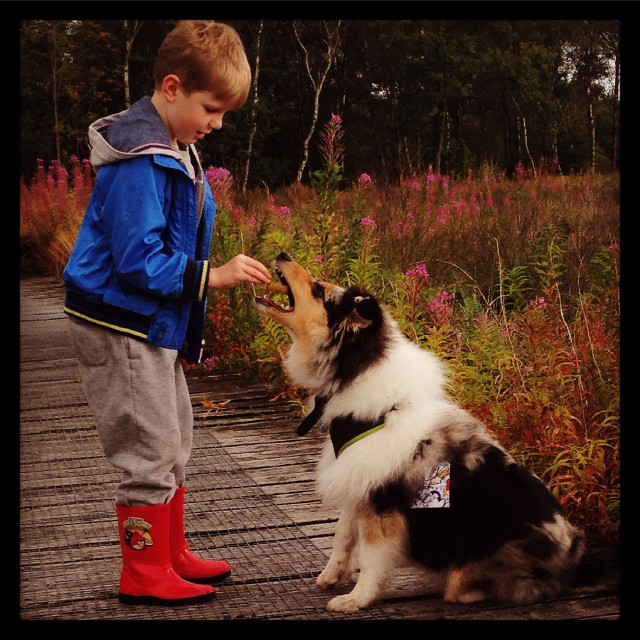"""""""Boy giving his dog a treat whilst out on a country walk."""" stock image"""