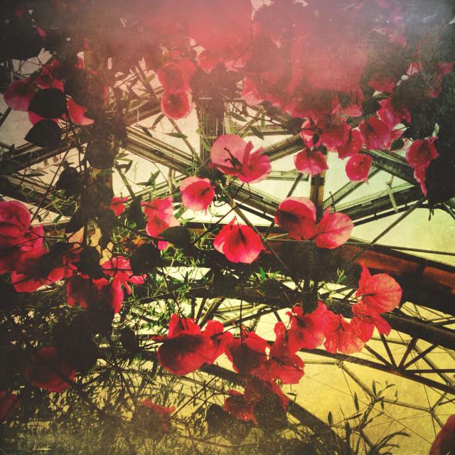 """Plants Eden project biospheres"" stock image"