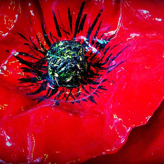 """Close up of ceramic Poppy"" stock image"