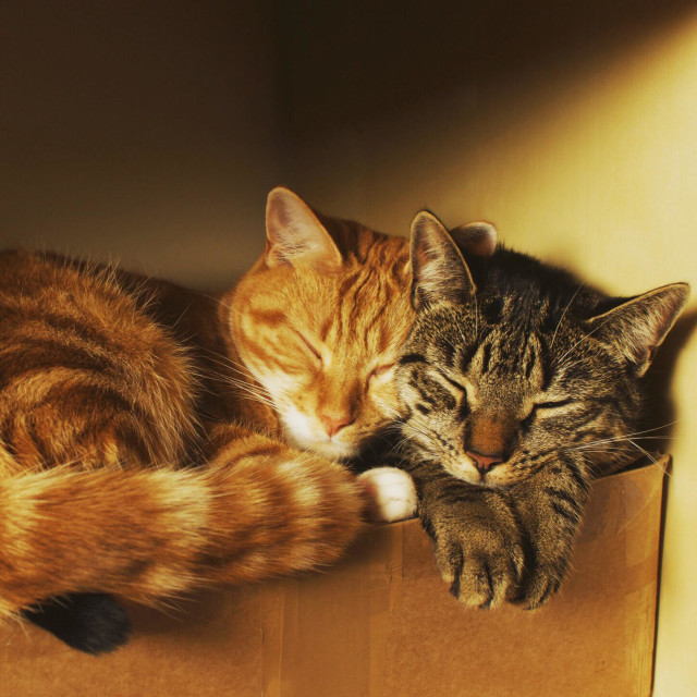 """""""Cats in a box"""" stock image"""