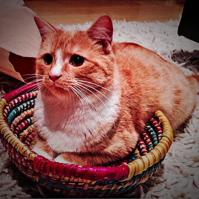 """""""Cat in a basket"""" stock image"""