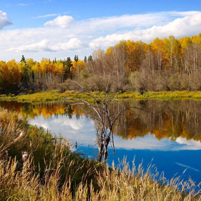 """""""Beautiful fall day"""" stock image"""