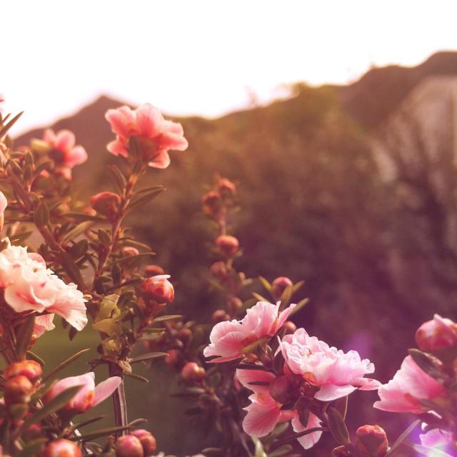 """""""A spring affair"""" stock image"""
