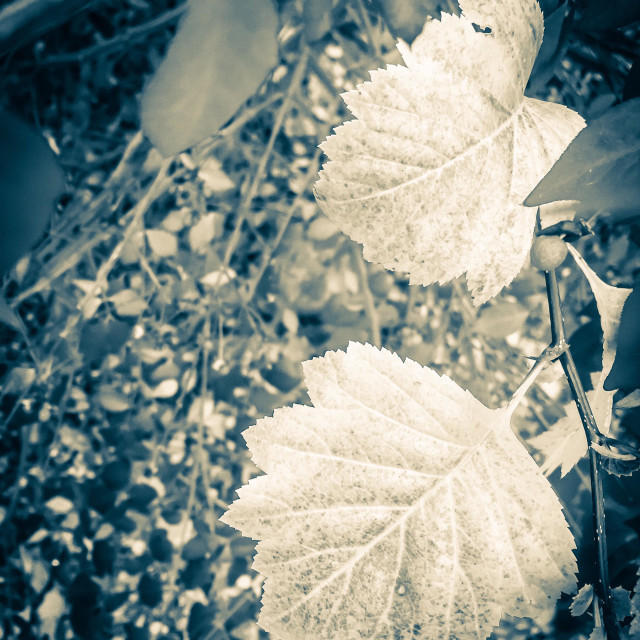 """""""Melancholic view of the changing leaves of autumn."""" stock image"""