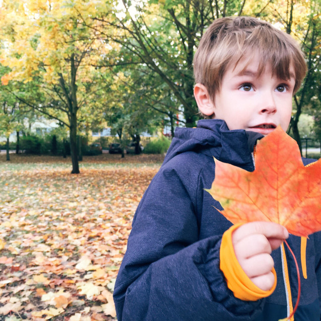 """""""Young boy holding red colored leaf in fall"""" stock image"""