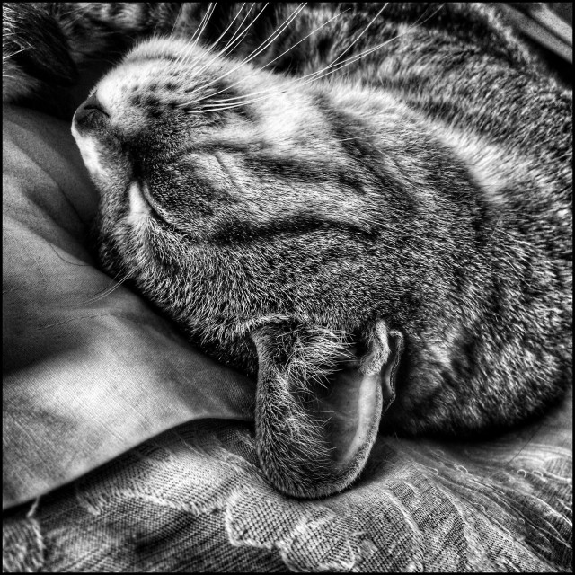 """""""Black and white photo of a sleeping cat."""" stock image"""