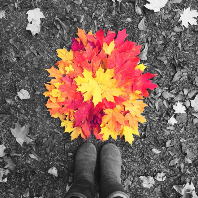 """""""Fall leaves with color pop"""" stock image"""