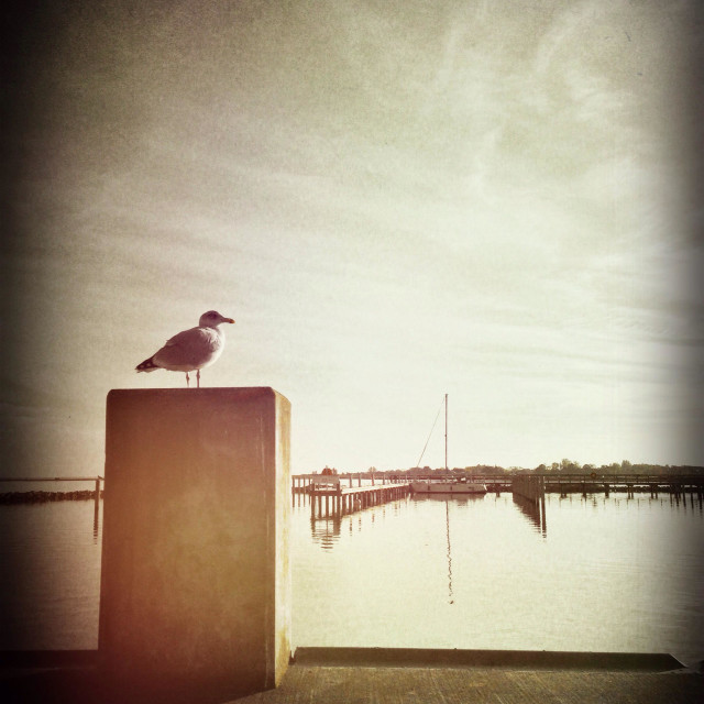 """Seagull on a concrete slab in the small harbour of Kloster on the German island Hiddensee in the Baltic Sea, Germany"" stock image"