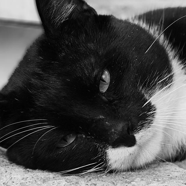 """Sad cat"" stock image"