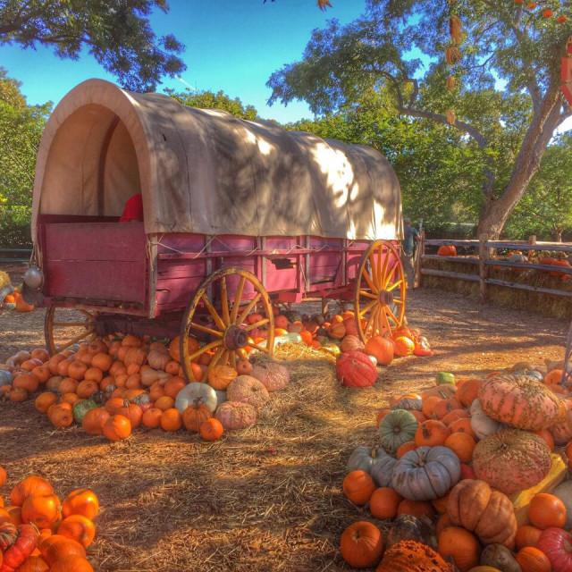 """""""Los colores de otoño"""" stock image"""