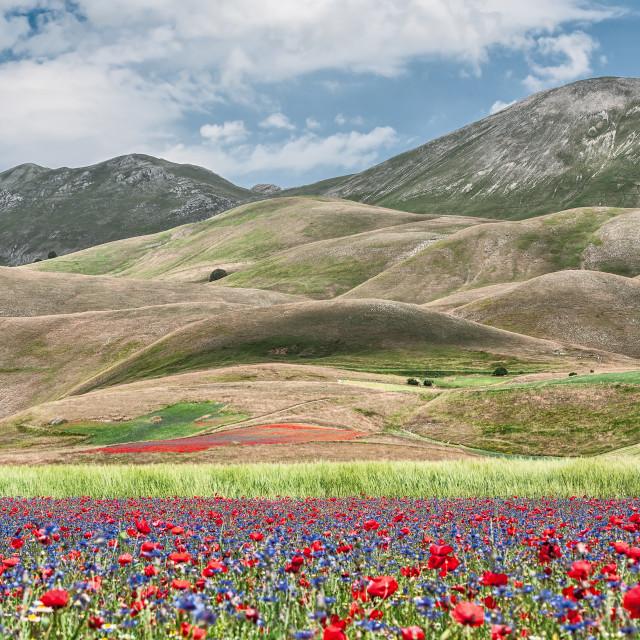 """""""Castelluccio during the flowering"""" stock image"""
