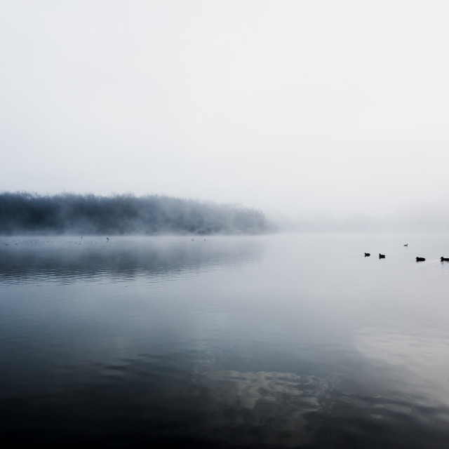 """""""Mist hovering over a cold lake in Goldsworth Park, Surrey, Wokin"""" stock image"""