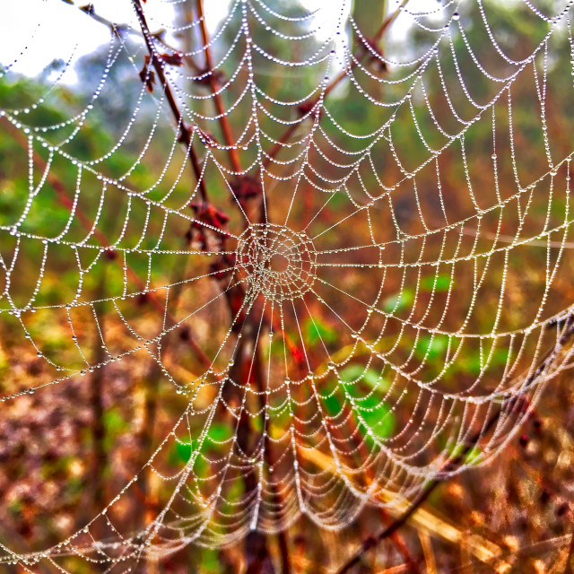"""Spiders Web covered in morning dew"" stock image"