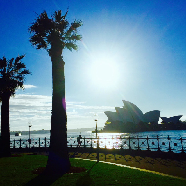 """""""Palm trees in front of the Sydney opera house Australia"""" stock image"""