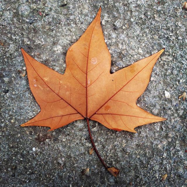 """Autumn leaf."" stock image"