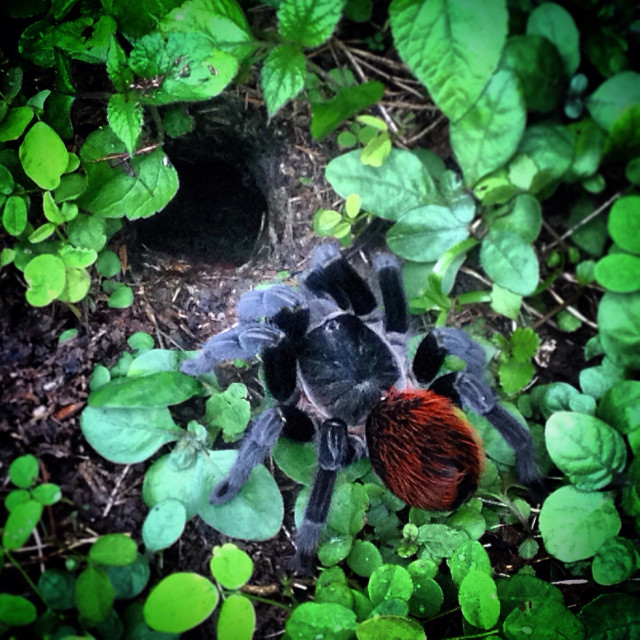 """""""A big spider near her nest in Ceibal Mayan ruins in Peten, Guatemala"""" stock image"""
