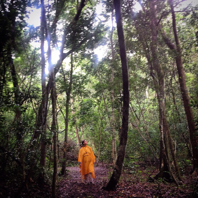 """A woman wearing a yellow rain poncho walks in the Mayan city of Mirador, Peten, Guatemala."" stock image"