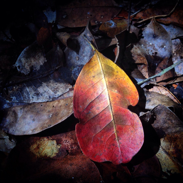 """""""A red leaf in the Mayan city of Mirador, Peten, Guatemala"""" stock image"""