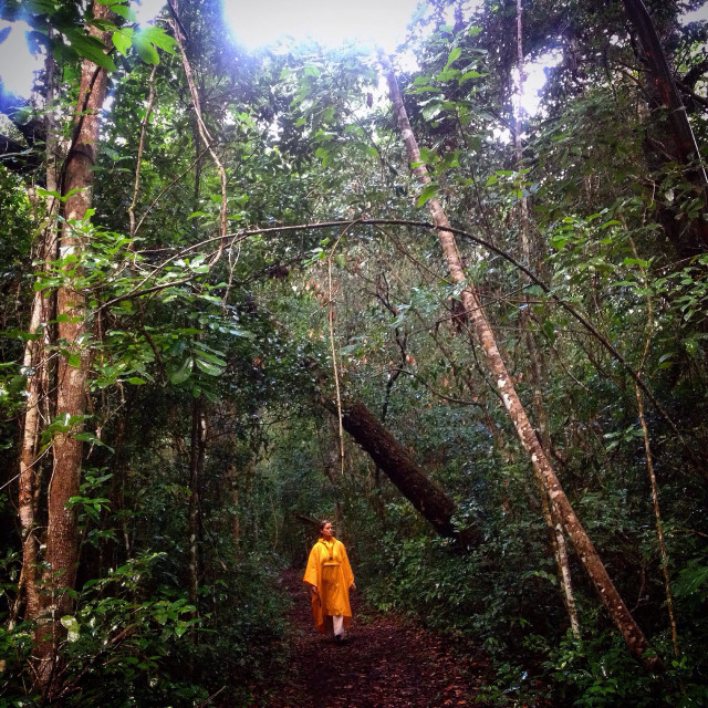 """A woman wearing a yellow poncho walks in the jungle in the Mayan city of Mirador, Peten, Guatemala"" stock image"
