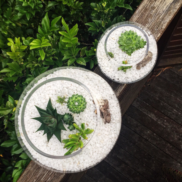 """""""Miniature landscapes in the set of two round gcterrariums with succulents and cacti"""" stock image"""