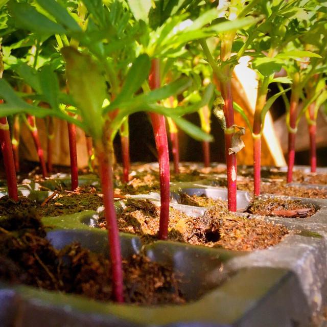 """Nursery plants"" stock image"