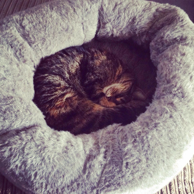"""""""Cat curled up in a furry basket"""" stock image"""