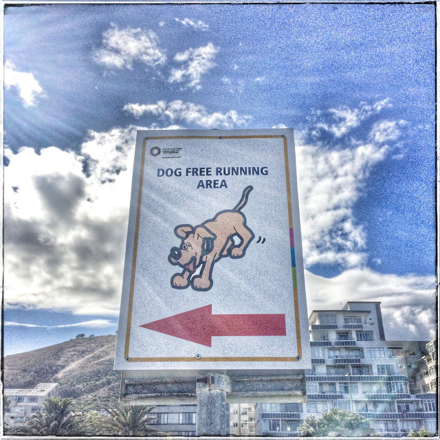 """""""""""Dog free running area"""" sign along the Seapoint Promenade, Cape Town."""" stock image"""
