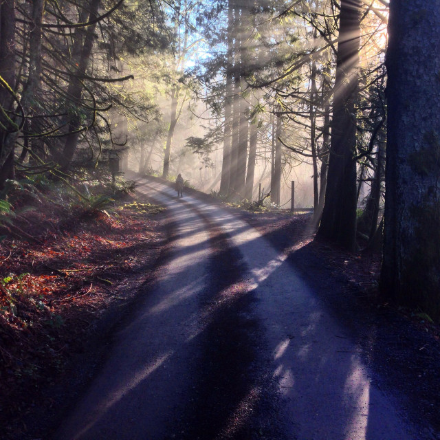 """""""A person walking down a dirt road through the forest as sun rays shine through the fog"""" stock image"""