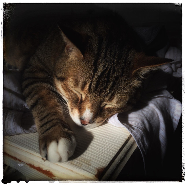 """Sleeping cat on cupboard."" stock image"