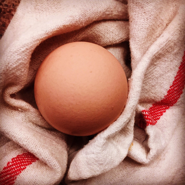 """""""Free-range brown egg wrapped in a cafe towel."""" stock image"""