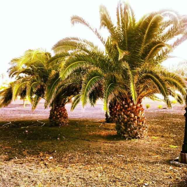 """Palm trees"" stock image"