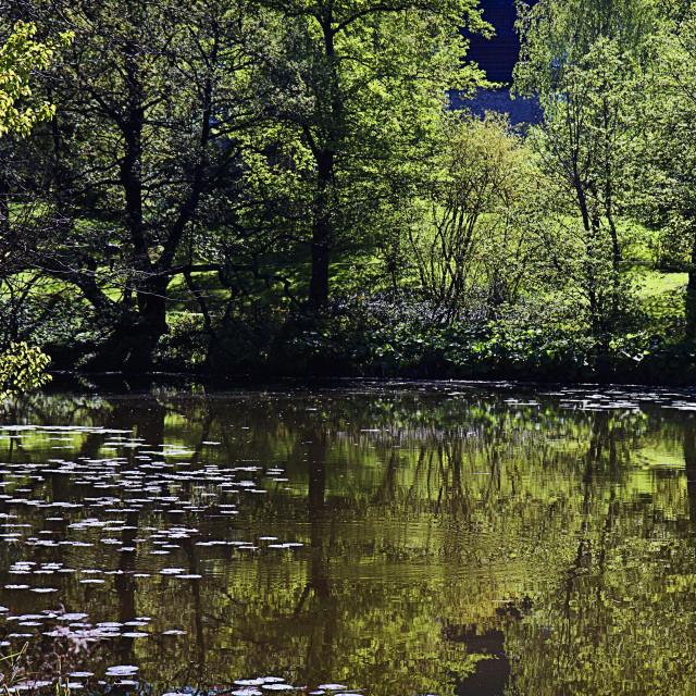 """Pond in Copenhagen park"" stock image"